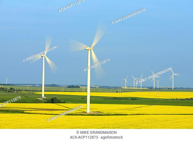Canola and wind turbines, Altamont, Manitoba, Canada