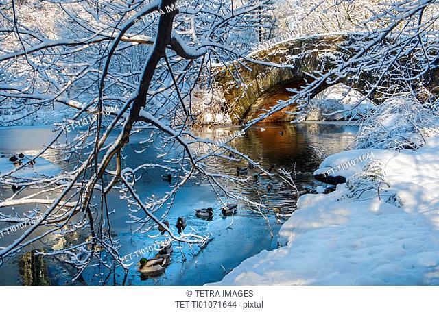 Bridge in Central Park in winter