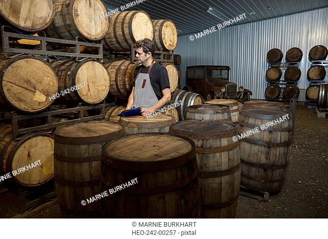 Worker examining oak barrels in distillery cellar