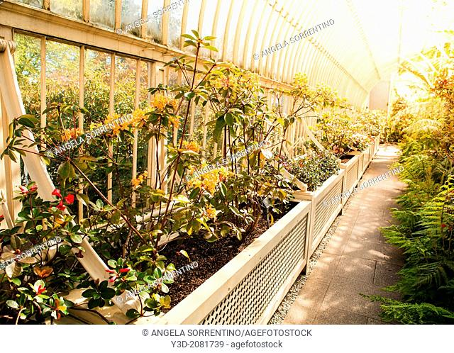 Greenhouse of the Botanical Garden, Dublin