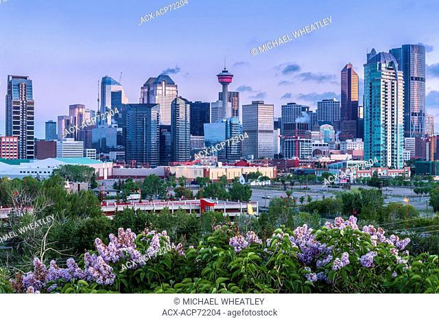 The Calgary skyline with the Calgary Tower, Calgary, Alberta, Canada