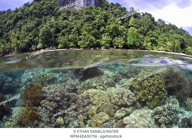Biodiversity in shallow Coral Reef, Raja Ampat, West Papua, Indonesia