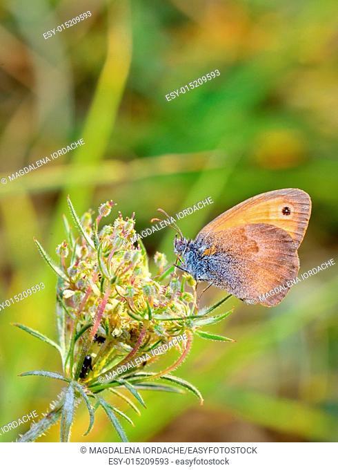 Butterfly on a flower in summer meadow