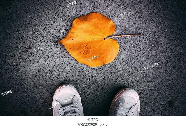 Knowing the Autumn is coming