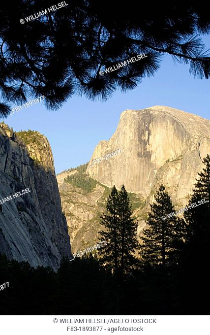 North America, USA, California, Sierra Nevada Mountains, Yosemite National Park, Half Dome, Washington Column on left, August, view from Yosemite valley floor
