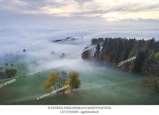 fog and forest in fall, Switzerland