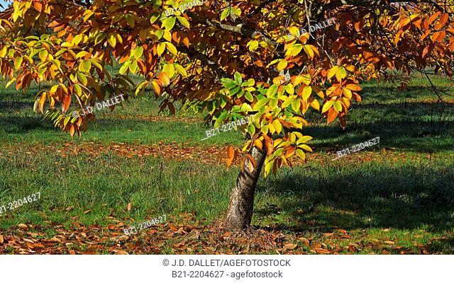 Autumn, Dordogne, Aquitaine, France