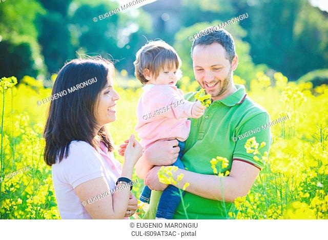 Mid adult couple and toddler daughter in yellow blossom field