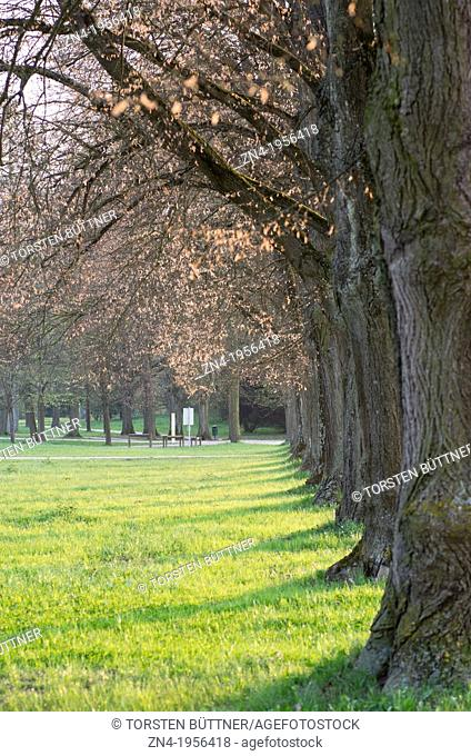 Trees in Botanica Recreational Park at Sunset in Bad Schallerbach. Austria
