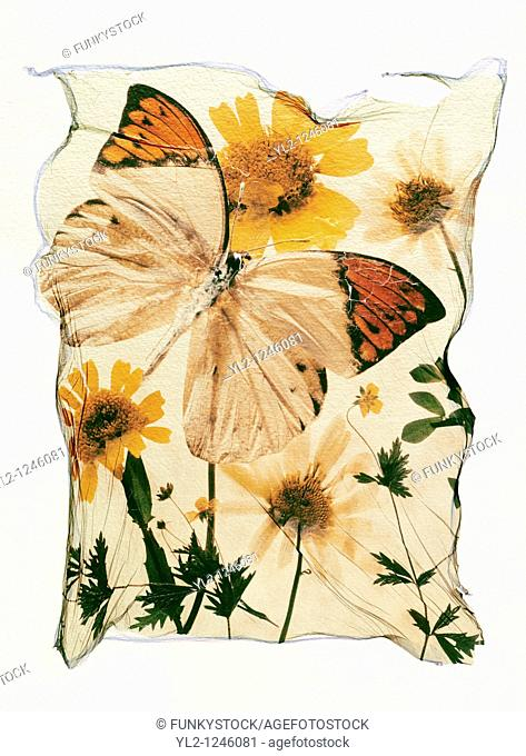 Orange tipped butterfly with wild pressed flowers in a graphic arrangement - Polaroid lift