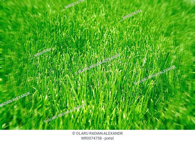 Very green grass