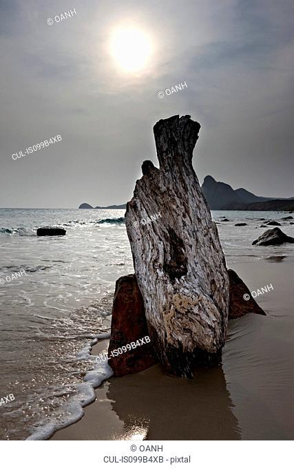Driftwood on Bai Nhat Beach, Con Dao Island, Vietnam