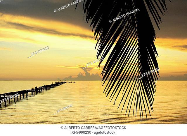 Orange sunset and palms, Caribbean, Isla de la Juventud, Cuba