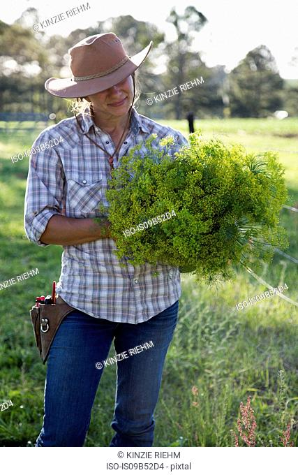 Young woman holding bunch of flowering dill (anethum graveolens) from flower farm field
