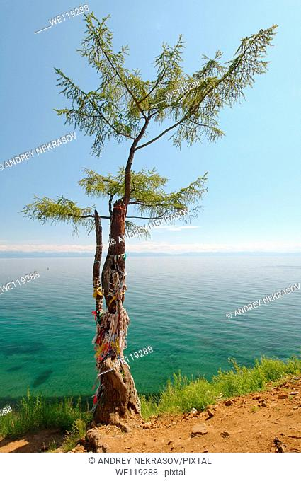 Tree of desires, settlement Listvyanka, Lake Baikal, Irkutsk region, Siberia, Russian Federation