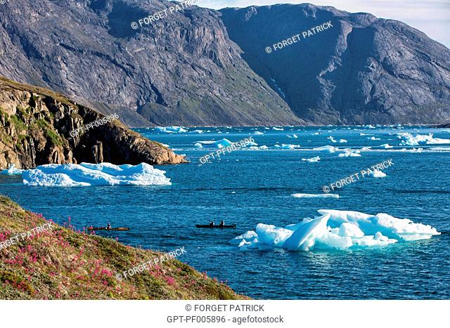 KAYAKING IN THE MIDDLE OF THE ICEBERGS THAT SEPARATED FROM THE GLACIER, FJORD OF NARSAQ BAY, GREENLAND