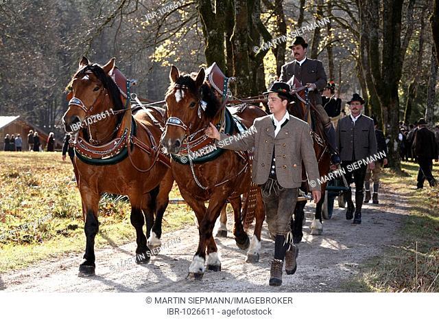 Coach during Leonhardifahrt, the feast day of Saint Leonard of Noblac, Kreuth, Tegernsee Valley, Upper Bavaria, Germany, Europe