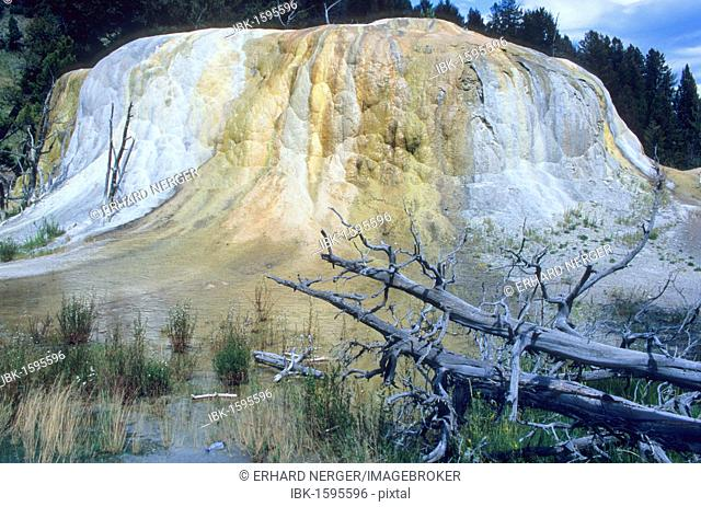 Orange Spring Mound, Mammoth Hot Springs, Yellowstone National Park, USA