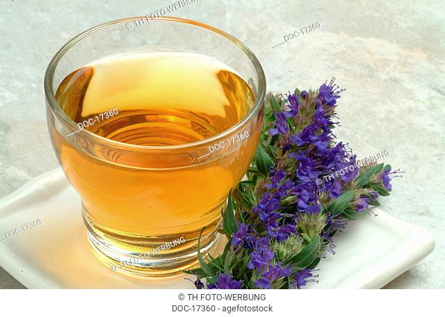 tea made of Hyssop - medicinal plant - herbtea - medicinal tea - Hyssopus officinalis - Issopo - te