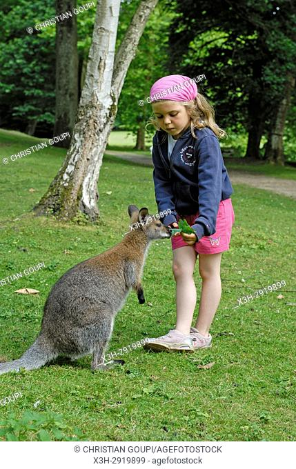 7 years old little girl with a Red-necked wallaby (Macropus rufogriseus) in the Park of the Chateau de Sauvage, Emance, Yvelines department
