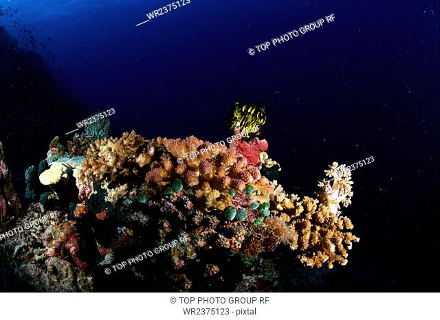 China Hainan Province Sansha City Nansha swallow Reef of the Nansha Islands underwater world 2009