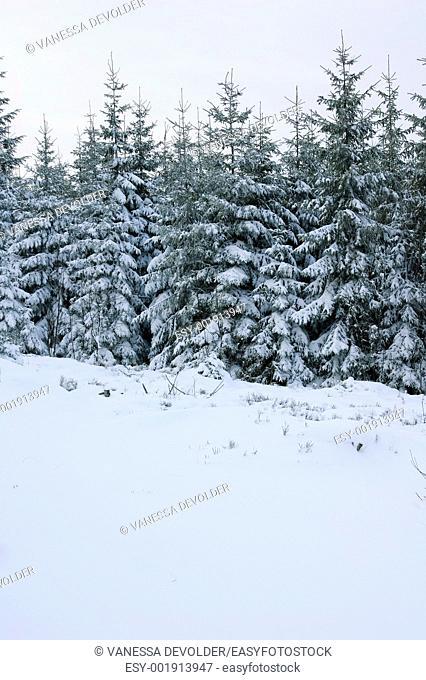 Winter landscape in France, Vosges