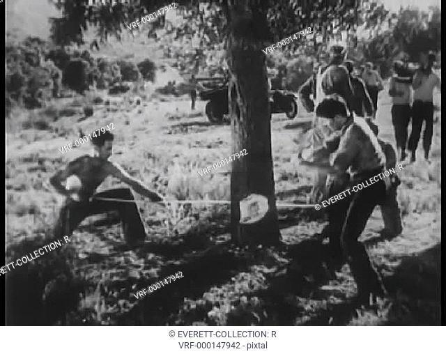 Two men cutting down tree
