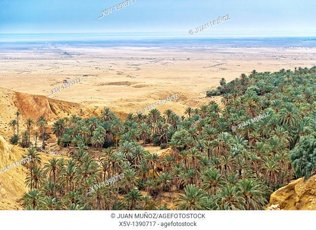 Oasis, Chebika mountain. Tunisia. Africa