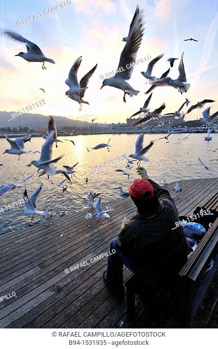 Man feeding gulls. Rambla de Mar, pedestrian walkway, connects La Rambla to Port Vell, Barcelona, Catalonia, Spain