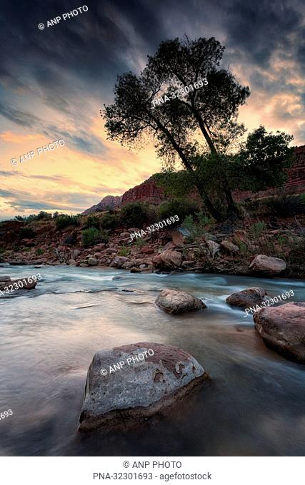 Zion National Park, Utah, United States of America, USA, North America, Zion National Park