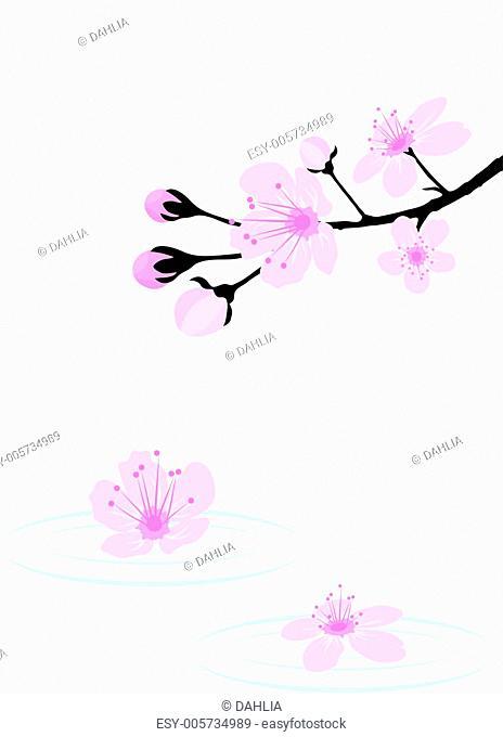 vector cherry branch over water