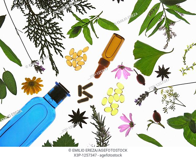 Medicinal plant  Capsules, pills, extracts