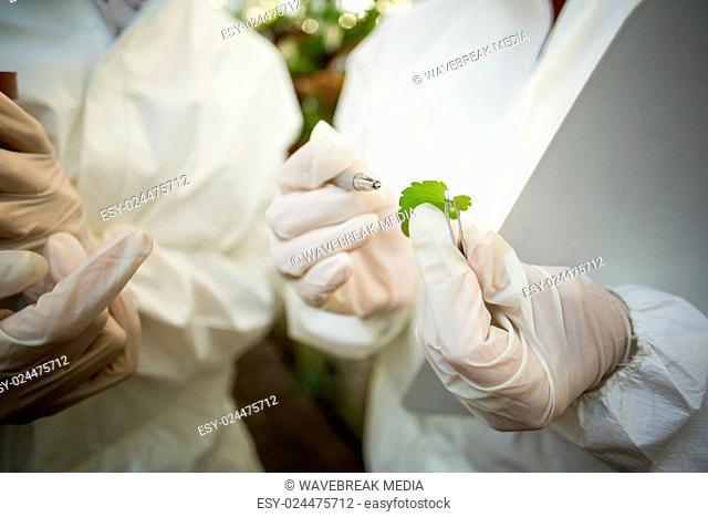 Scientists examining plant leaf