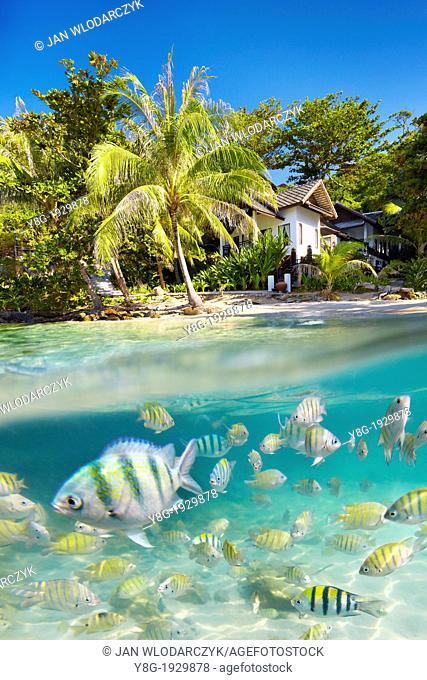 Underwater sea view of small fish at Ko Samet Island, Thailand, Asia