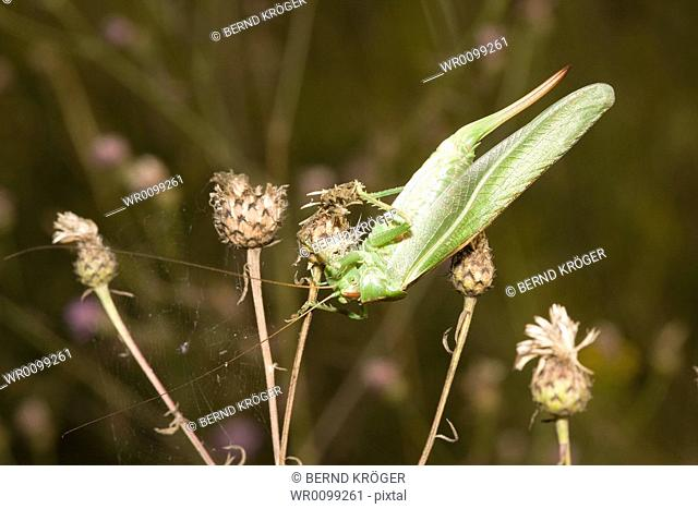 large grasshoppers on a meadow flower