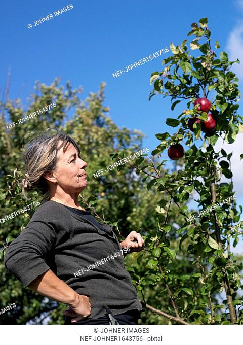 Woman in orchard