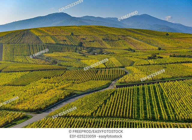 Wine Road, Vineyards of Alsace in France, Europe