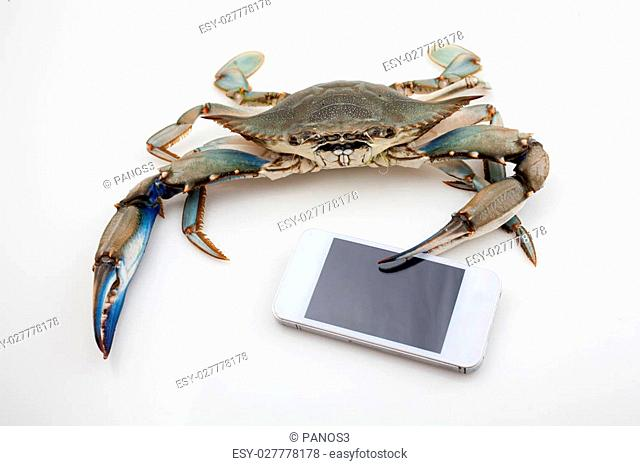 Blue crab holding a mobile phone isolated on white background under studio lights