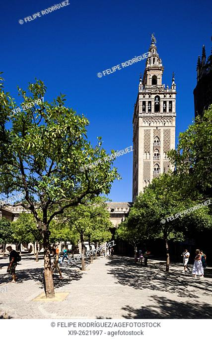 The Giralda Tower as seen from the Patio de los Naranjos (Orange Tree Courtyard), Seville, Spain
