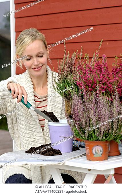 Woman is planting erica