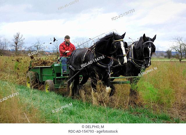 Shire Horse and cart fieldwork Wabern Hesse Germany