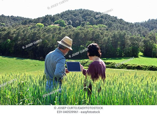 couple farmer in a wheat field. Porqueres, Girona province, Spain