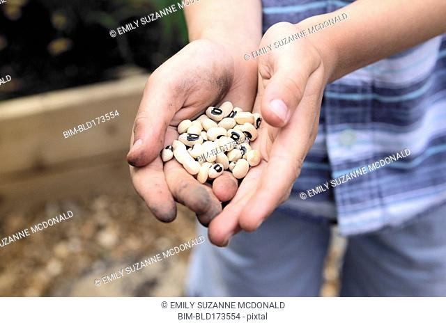 Caucasian boy holding black eyed peas in garden