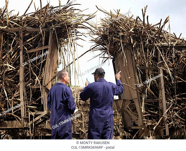 Workers Discussing Sugar Cane