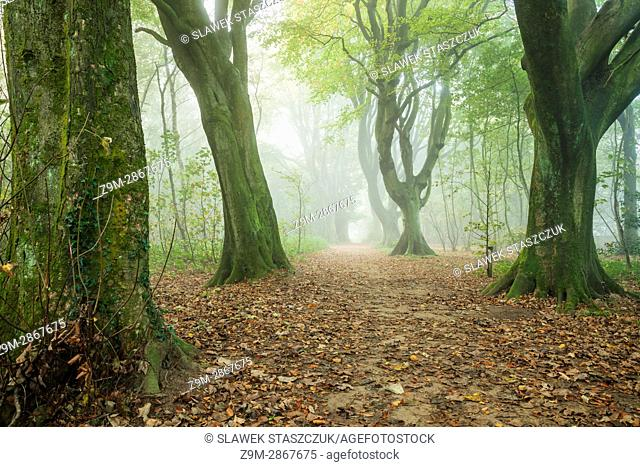 Foggy morning in Stanmer Park, East Sussex, England. South Downs National Park