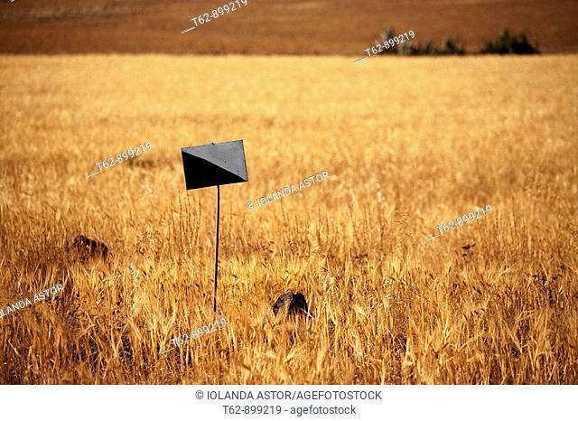 Signal in a wheat field  Playa de los Genoveses, Parque Natural de Cabo de Gata, Almería, Spain