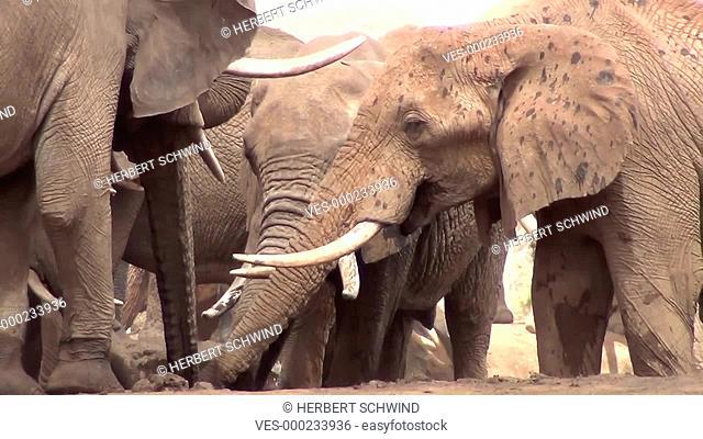 Elefantenherde steht in und am Wasserloch, im Satao Camp, Tsavo-Ost Nationalpark, Kenia