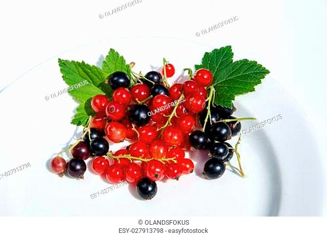 Red and black currants on a white plate