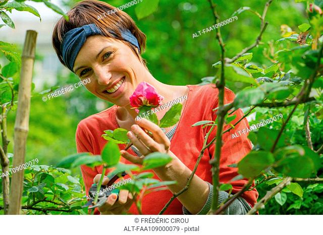 Woman tending to rosebush in garden, portrait