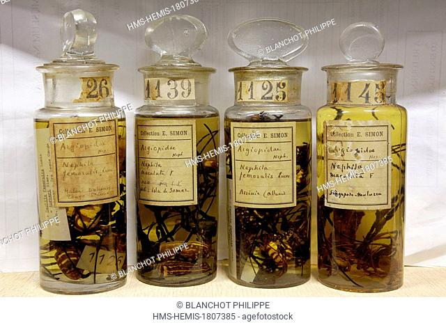 France, Paris, Museum National d'Histoire Naturelle, Arachnology Laboratory, Spiders conserved in alcohol, Eugene Louis Simon (1848-1924) collection